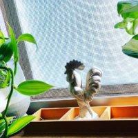 バニラの育て方|植え付け時期や水やりの方法は?の画像