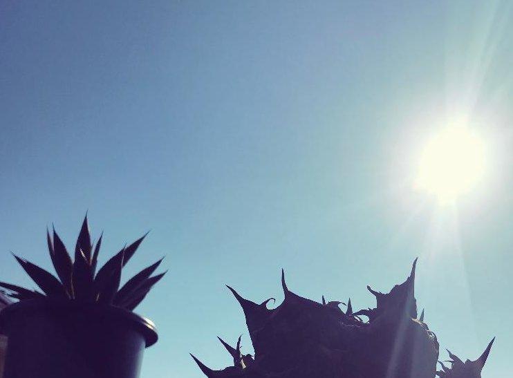 日光、Photo by yataさん