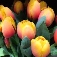 チューリップの花言葉|花が咲く時期や種類は?の画像