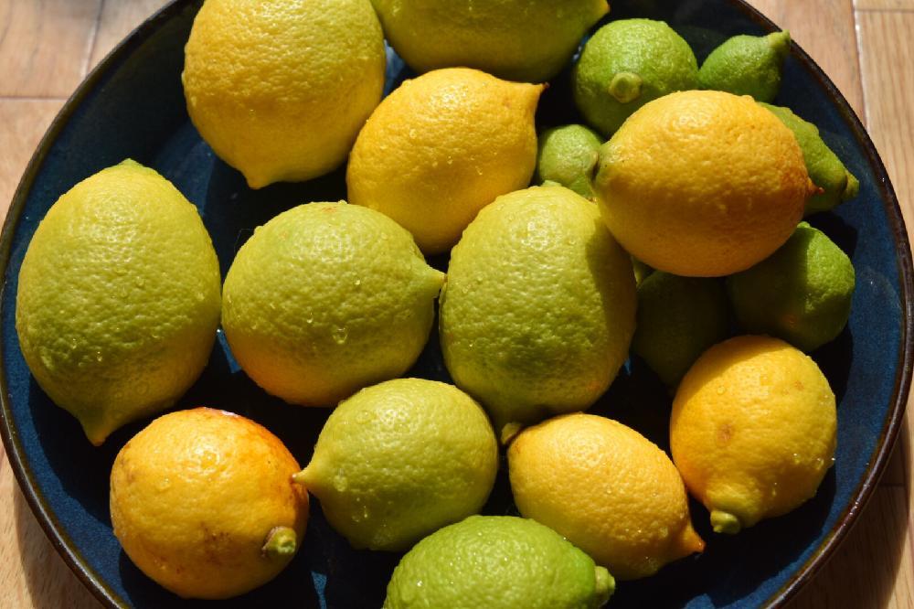 レモン、Photo by おすみさん