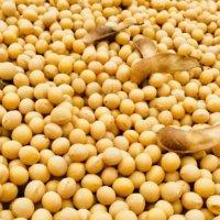 大豆の育て方|種まきや植える時期は?プランターでも栽培できるの?の画像