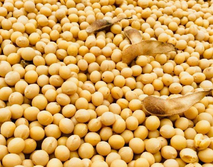 大豆の育て方の画像