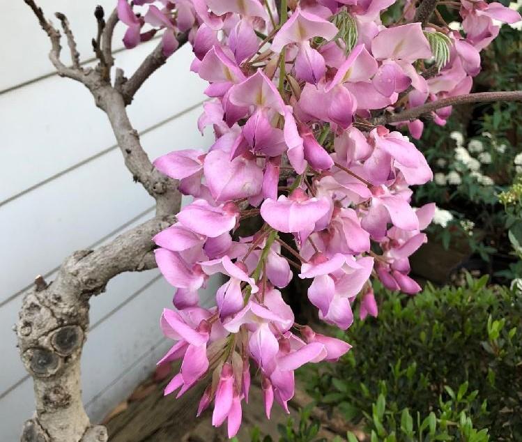 フジ photo by 花の恋