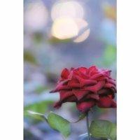 今週の人気『みどりのまとめ』5選!赤薔薇の撮り方 / タンポポのドライフラワーを作ります などの画像