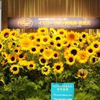 【会場に潜入】2019年度ベスト•ファーザー「イエローリボン賞」授賞式の豪華な花装飾が圧巻すぎる!の画像