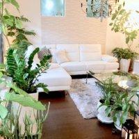 カインズおススメ!空気清浄効果のある植物5選をご紹介♪の画像