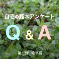 自宅の庭木アンケートQ&A 第二弾【雑草編】の画像
