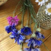 今週の人気『みどりのまとめ』5選!押花万華鏡 / ミックスフラワーの種から育て奮闘記!!小さな庭で種から21種類の花が咲きました! などの画像