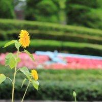今週の人気『みどりのまとめ』5選!お花の撮り方 / 紫陽花のドライフラワーに初挑戦♪ などの画像