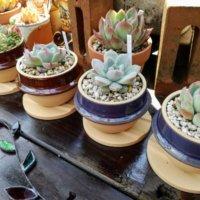「益子焼のうつわ」がおしゃれな花瓶に早変わり!鉢植えに合う植物は?の画像