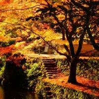 秋を彩る紅葉スポット!絶対に行きたい関西のおすすめはどこ?の画像