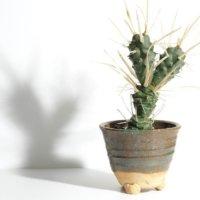 「信楽焼の鉢」は植物に重厚感と深みをだす!相性のいい植物とは?の画像