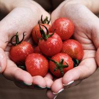 【新食感】令和に食べたいミニトマト、ぷるりん。その食感と美味しさの理由とは?の画像
