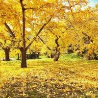秋はここを歩きたい!黄金色に染まる全国のイチョウ並木の画像