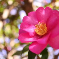 美しき「11月の花」写真展|みんなはいくつ知っている?の画像