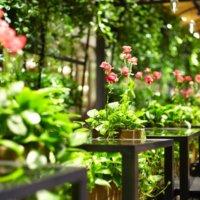 植物に癒される!「東京」で人気のボタニカルカフェはどこ?の画像