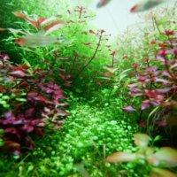 『水中を彩る水草フォトコン』結果発表|選んだポイントを編集部が解説の画像