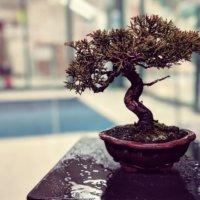 華やかで芸術的、海外でも大人気の盆栽アート特集の画像