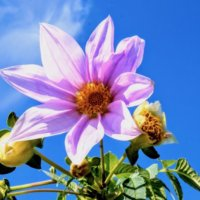 美しき「11月の花」写真展|人気の種類や品種、特徴、開花時期は?の画像
