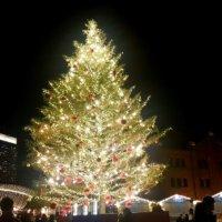人生で一度は見てみたい!世界の美しすぎるクリスマスツリー10選の画像