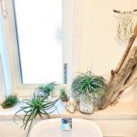 トイレに置きたい観葉植物8選!風水でおすすめの種類や飾り方とは?の画像