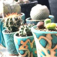 人気陶器の「笠間焼き」なら、植物がかっこよくも可愛くも変幻自在?の画像