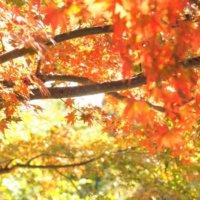 今週の人気『みどりのまとめ』5選!山形県総合運動公園の紅葉は凄いです!/ 紅葉キラキラ などの画像