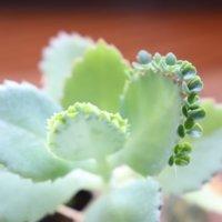 なにこれ不思議!個性的な葉っぱをもつ植物10選の画像