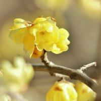 うるわしき「1月の花」写真展|みんなはいくつ知っている?の画像