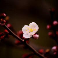 お正月に飾りたい縁起のいい植物10選|重宝されるその理由とは?の画像