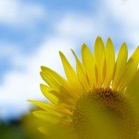 【夏の花図鑑】夏に咲く花の名前と、それぞれの開花時期は?の画像
