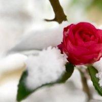 寒さ吹きとぶ美しさ!「雪化粧」をした植物たちの風景をのぞいてみようの画像