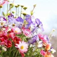 春の花図鑑|3月、4月、5月の開花時期別に花の名前をみてみよう!の画像