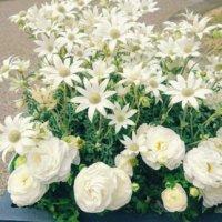 【白い花図鑑】人気の品種を、季節ごとに分けて紹介します。の画像