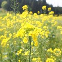 【黄色い花図鑑】人気の品種を、春・夏・秋・冬の季節別にご紹介します!の画像