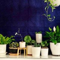 寝室におすすめの観葉植物7選!置き場所で風水効果も!の画像
