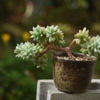 今週の人気『みどりのまとめ』5選!まるで盆栽!?樹氷の生長記録などの画像