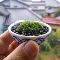 ミニ植物と相性◎!お猪口でテーブルグリーンを飾ろうの画像