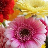 10月の誕生花|日にちごとの花の一覧や花言葉、フラワーギフトにもおすすめ?の画像