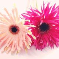 応援やがんばれの意味を持つ花言葉|プレゼントして元気を贈ろう!の画像