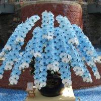 胡蝶蘭の肥料|選び方や使い方、与えるときの注意点は?の画像