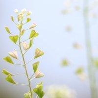 健気な「2月の花」写真展|みんなはいくつ知っている?の画像