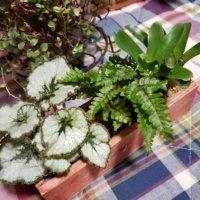 観葉植物のおすすめ30種類!人気なのは?室内で育てやすいのは?の画像