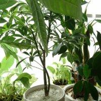 初心者におすすめの観葉植物!大きさや置き場所は?の画像