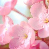 【冬の花図鑑30選】冬に咲く花の種類は?それぞれの開花時期はいつから?の画像