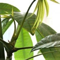 人気のおしゃれ観葉植物20選!室内でも育てやすい種類は?の画像