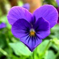 気分はバレンタイン?見つけたら幸せな気分になれるハートの植物の画像