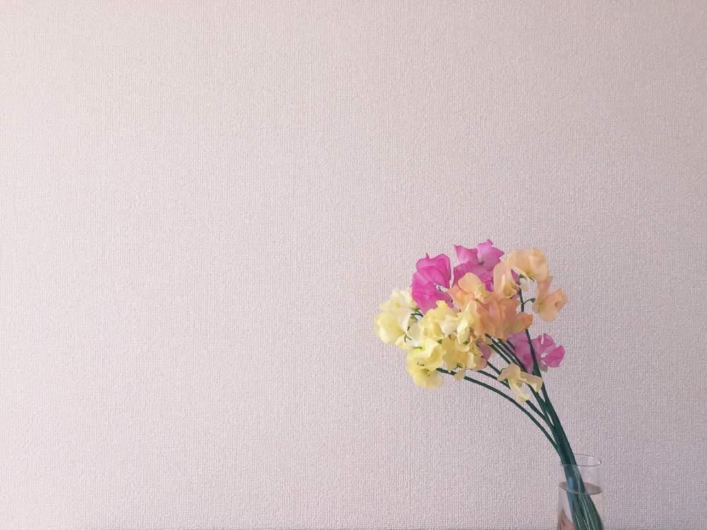 スイートピー 花 言葉 スイートピーの花言葉(誕生花、英語、季節)