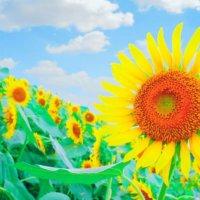 8月の誕生花|日にちごとの花の一覧や花言葉、フラワーギフトにもおすすめ?の画像