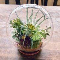 ガラスドームで魅せる!いつもと違う姿の植物たちの画像